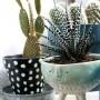 Rośliny, kaktusy i inne sukulenty - hej, dziś bez kurzu i pyłu ;) moja galeria inspiracji związana z roślinkami, które pojawią się w moim m3 :) więcej jak zawsze tutaj: http://panikroliczek.blogspot.com/2016/04/inspiracje-sukulenty-rosliny-dla.html