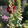 Ogród, Czar małego ogródka