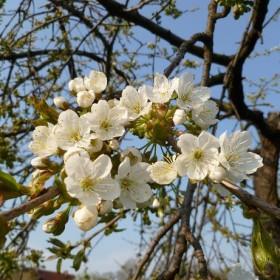 wiosna dalsza część -a w niej jak ciężko pszczółki pracują &#x3B;))