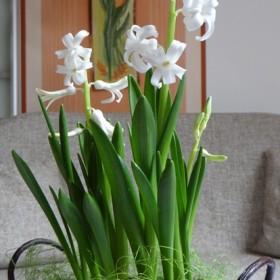 Poszukiwanie wiosny