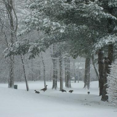 Jak bialo i cudownie dookola,pani zima sypie swym puchem wszedzie...jest slicznie!