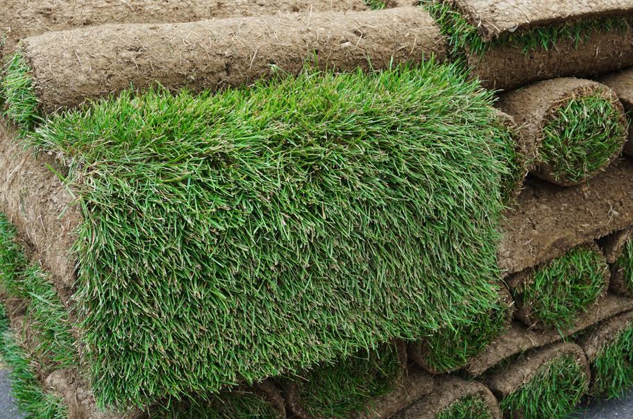 paleta trawnika z rolki