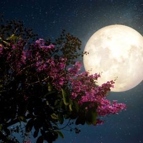Kalendarz księżycowy ogrodnika – luty 2019