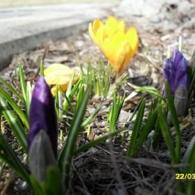 Wiosennie, kolorowo......