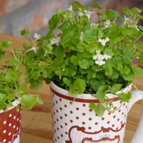 Ogródek w kubeczkach