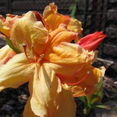 kwitnący ogród:)