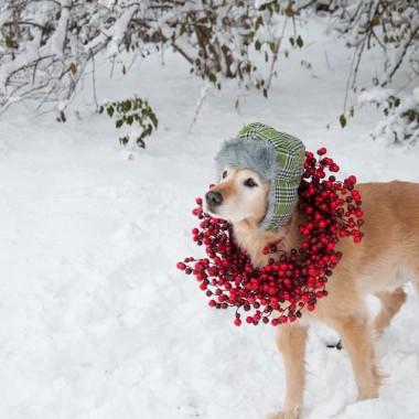 Zimowo.......
