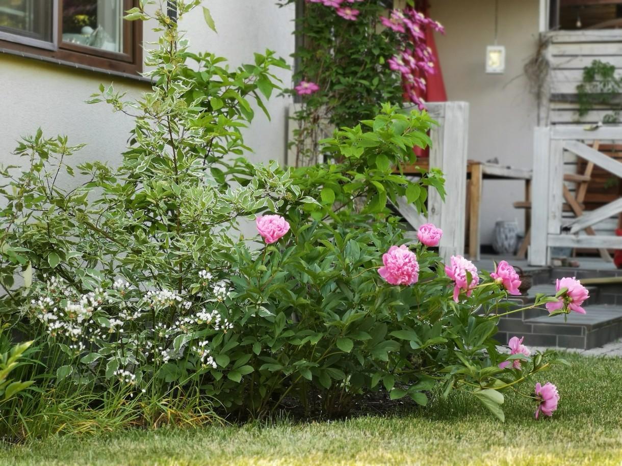 Ogród, Ogrodowo