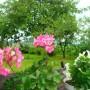 Pozostałe, ogród po deszczu:)