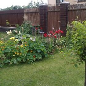 Mój skromny ogródek