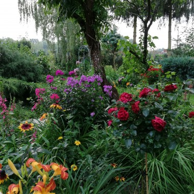 Lubię róże. Poza kolorem wnoszą  do naszego ogrodu aromat. Mogę na nie patrzeć , wąchać je  i ustawiać w wazonie. Są  moimi ulubionymi kwiatami.