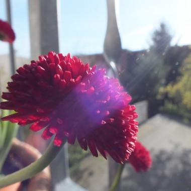 bo ja wiosne kocham......