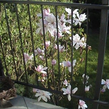 Wiosna Arcadki