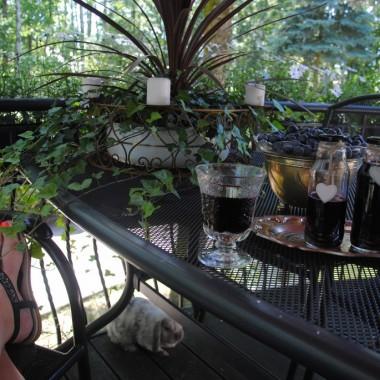 zbiory borówki i letni relaks :)