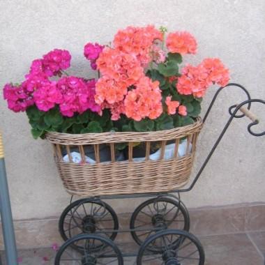 Ogród...Kwiaty...cz.1