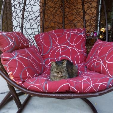 to w zasadzie nie jest normalny kot...tylko pełnoprawny członek rodziny...wymagający...kapryśny, ale jaki przymilny i kochany...uwielbiamy Nutkę, zwaną też Franczeska, Nulka, Nuluń, Nulisia, w chwilach ogromnych szkód Franka...albo Franuś, coś ty zrobiła...budzi nas rano...wita, jak przyjeżdżamy...kłóci się , jak nie ma kurczaka i generuje koszty u weta...zdjęć ma dużo, ale w większości u kogoś na rękach, kolanach, na klatce piersiowej i w różnych dziwnych miejscach...solo rzadko, więc niewiele zdjęć w mojej galerii...no i uważamy oczywiście, że ładniejszego kota nie ma...nie wiemy ile ma latek, bo to znajda...ale z nami zostanie do końca świata i wiele lat świetlnych dłużej...a na frontowym zdjęciu ja z moim pupilkiem...