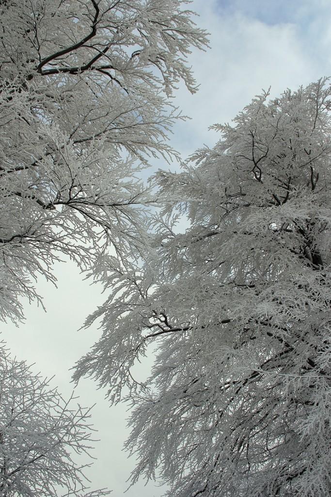 Pozostałe, zimowo - .