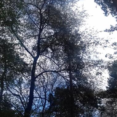 """...""""Słońce ucieka w górę, wyżej, promienie nagle wyszły gdzieś z kniei,wiosna się skrada zielenią drzew,pola się budzą, uśmiech nadziei.Na lepsze dni, na ciepła dotyk,na łące mlecze - żółte puchatkii śmiech raduje te ciepłe dniw trawie coś skrycie mamroczą bratki.Ich oczy kreską podkreślił błękit,zdziwione takie, chabrowe piękne !mrugają barwą w kolorach tęczypłatki fruwają w niciach pajęczyn.Paletą barw, tańczą zakwitemjak barwny motyl, jak złote słońcejak stado cytryn, kolorów koncert,tak kwitną kwiatki wiosną na łące. """"... Nadszedł majówek czas spędzany w rodzinnym gronie i wśród przyjaciół na łonie natury,w  domach,ogrodach,z ciekawą książką lub przy grillach i ogniskach jak kto woli, najważniejsze chwile razem  spędzone pełne relaksu i odpoczynku :) Zapraszam kochane deccorianki na majówkową fotorelację :)"""
