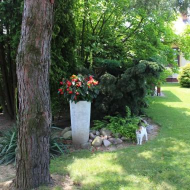 W czerwcowym, kwiatowym ogrodzie :)