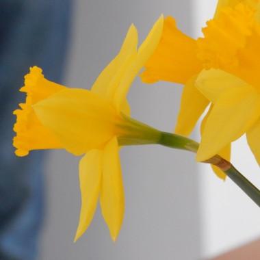 Do marcowego garnca wrzuciłam śnieg z deszczem,wiosenne kwiaty, króliczki i długie spacery po mojej  okolicy...jeszcze tylko wymieszam ....i już zapraszam do oglądania :)