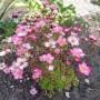 Rośliny, OGRODNIK :)
