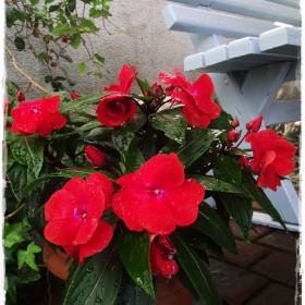 W kolorach sierpnia - przy mojej ławeczce - zapraszam &#x3B;&#x3B;