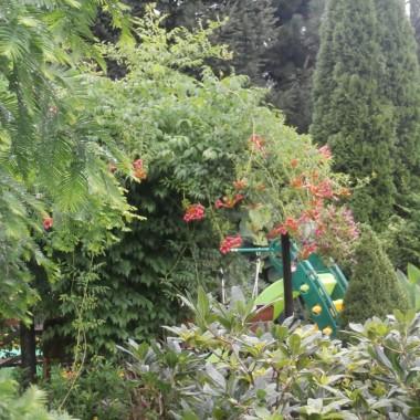 Lato- kolejna odsłona