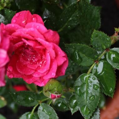 Szkoda że tak mało deszczu spadło, susza zaczyna dokuczać...