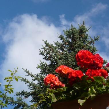 ................i błękitne niebo..................