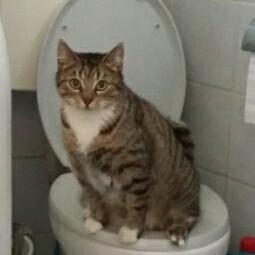 Wszystkiego najlepszego z okazji Dnia Kota wszystkim Kotom