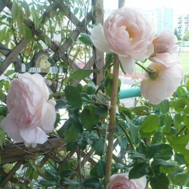 Róże i nie tylko one...