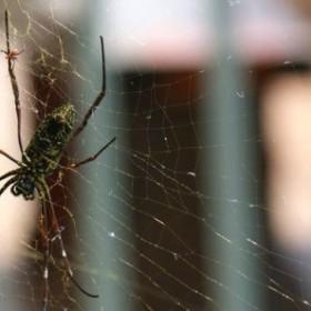 Sposób na pająki w mieszkaniu
