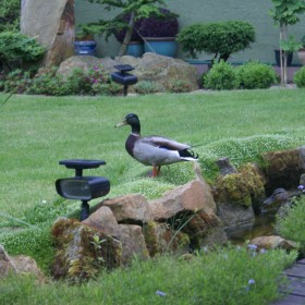 Niecodzienni goście w ogrodzie
