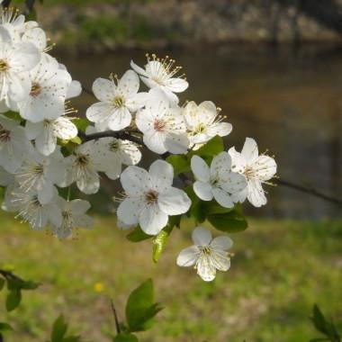Wiosna w parku nad morzem..................