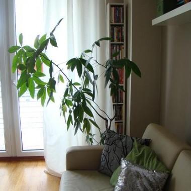 Drzewko dla odmiany po malowanym - żywe, jak długo, to się jeszcze okaże :-)
