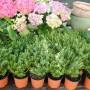 Pozostałe, Kwietniowe lato :) - Uwielbiam takie zakupy :)