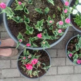 Wiosna na tarasie