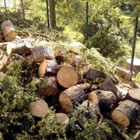 Wycinka drzew trudnych - jak znaleźć ekipę