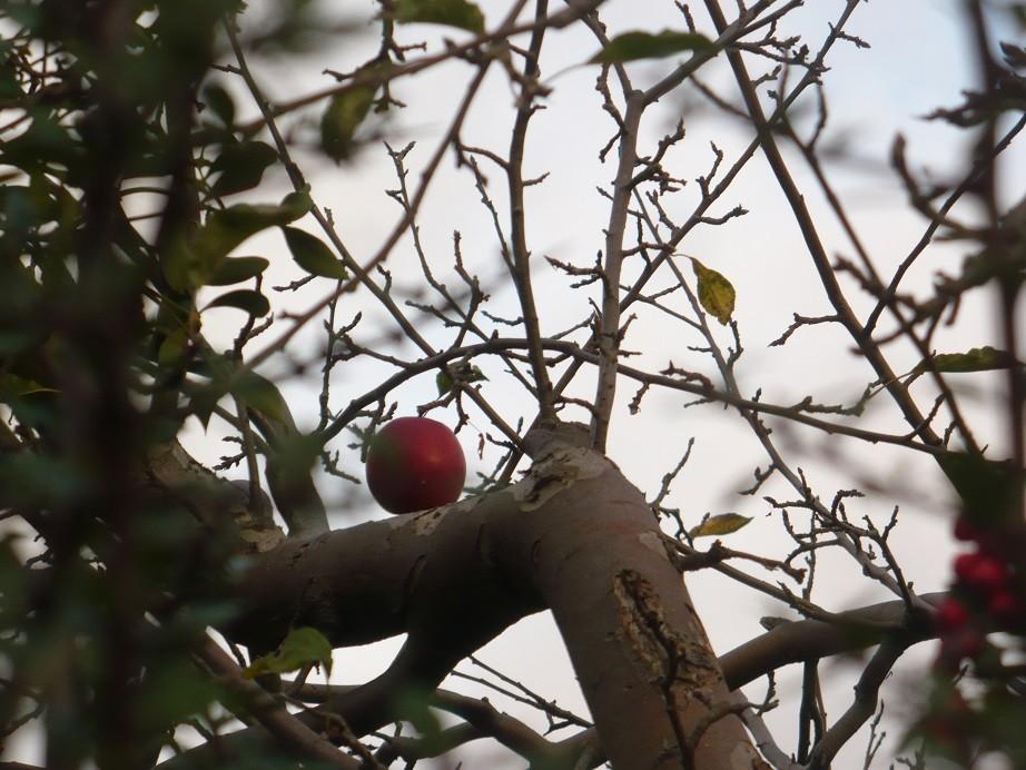 Pozostałe, Jeszcze październik............. - ..............i jabłuszko na jabłoni.................