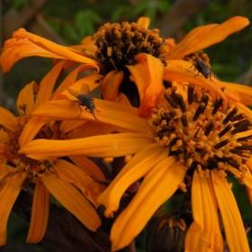 Kwiaty z mego ogródka, na suche bukiety
