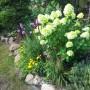 Rośliny, Lato w moim domu - Czas hortensji