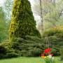 Pozostałe, Mój wspaniały ogród. - CYPRYSIK