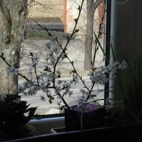 Wiosenno-Światecznie