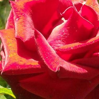 Dziki ogród mojego ojca w sierpniowym słońcu...........