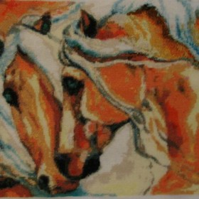 Para koni