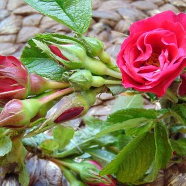 ...............i różyczki.................