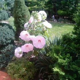 Kwiaty uciekającego lata