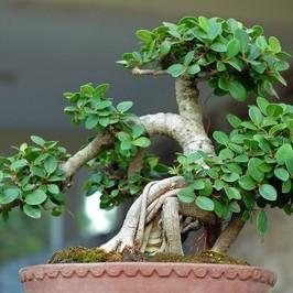 kocham te drzewa!!!