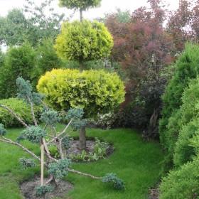 lipcowego ogrodu ciag dalszy...