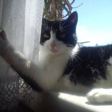 Mysia-była z nami prawie 14 lat. Po niej miało już nie być kotów w naszym domu. Ale nie mogliśmy nie przygarnąć dwóch porzuconych  blidul Nutki i Luny.